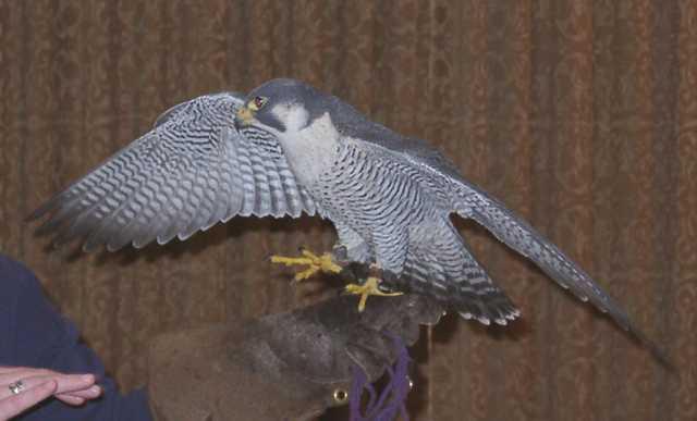 falcon04