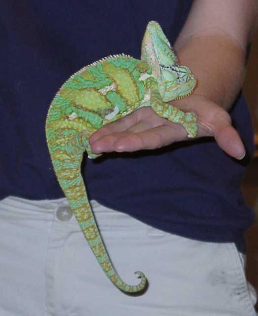 chameleon02