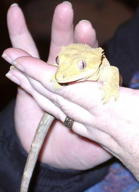 gecko01